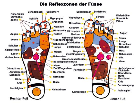 Erläuterung der Fußreflexzonen
